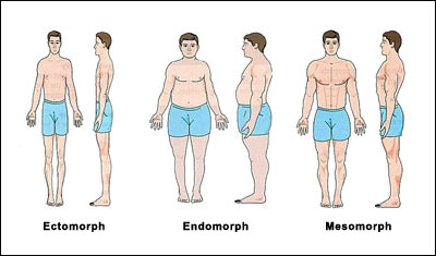 The 3 Body Types & What That Means For You